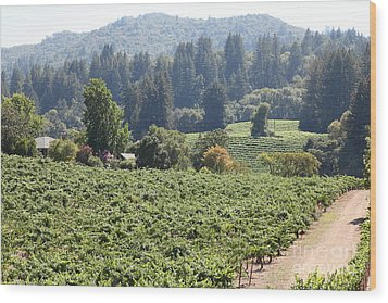 Sonoma Vineyards In The Sonoma California Wine Country 5d24585 Wood Print by Wingsdomain Art and Photography