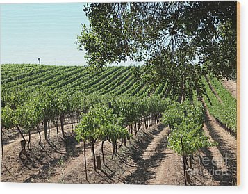 Sonoma Vineyards In The Sonoma California Wine Country 5d24594 Wood Print by Wingsdomain Art and Photography