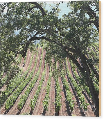 Sonoma Vineyards In The Sonoma California Wine Country 5d24619 Square Wood Print by Wingsdomain Art and Photography