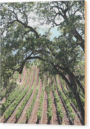 Sonoma Vineyards In The Sonoma California Wine Country 5d24619 Vertical Wood Print by Wingsdomain Art and Photography