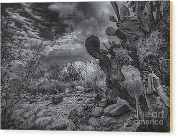 Wood Print featuring the photograph Sonoran Desert 15 by Mark Myhaver