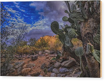 Sonoran Desert 54 Wood Print