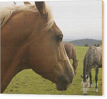 Sorrel Horse Profile Wood Print by Belinda Greb