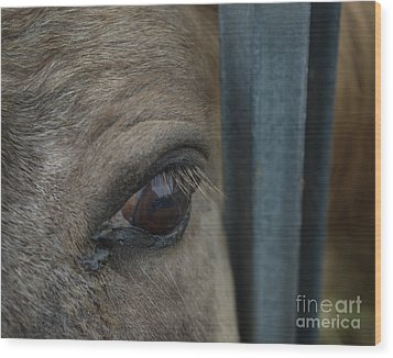 Wood Print featuring the photograph Soul Searching Eyes by Peter Piatt