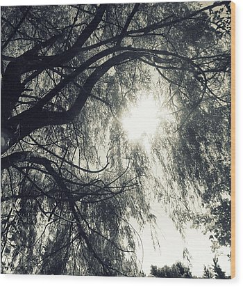 Source Of  Energy Wood Print by France Laliberte