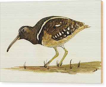 South American Painted Snipe Wood Print by Juan  Bosco