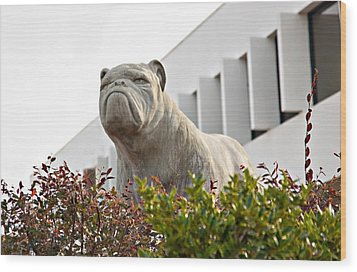 South Carolina State University Bulldog Wood Print
