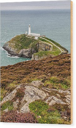 South Stack Lighthouse Wood Print by Adrian Evans