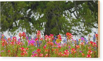 South Texas Blend Wood Print