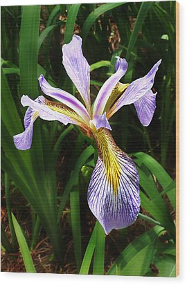Wood Print featuring the photograph Southern Blue Flag Iris by William Tanneberger