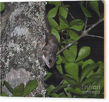 Southern Flying Squirrel Wood Print by Al Powell Photography USA
