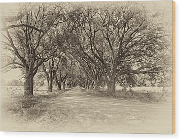 Southern Journey Sepia Wood Print by Steve Harrington