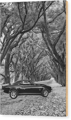 Southern Muscle Wood Print by Steve Harrington