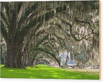 Southern Oaks Wood Print