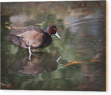 Wood Print featuring the photograph Southern Pochard by Tyson and Kathy Smith