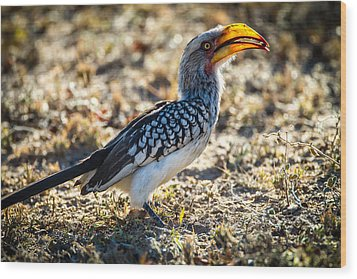 Southern Yellow Billed Hornbill Wood Print by Craig Brown