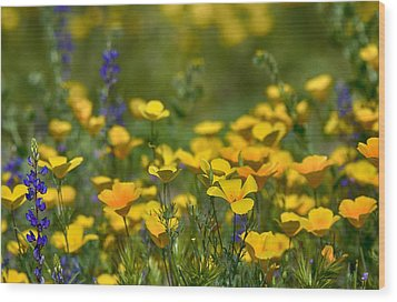 Southwest Wildflowers  Wood Print by Saija  Lehtonen