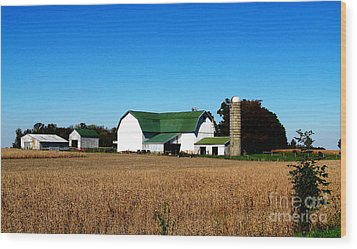 Soybean Farm Wood Print by Tina M Wenger