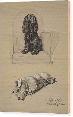 Spaniel And Sealyham, 1930 Wood Print by Cecil Charles Windsor Aldin