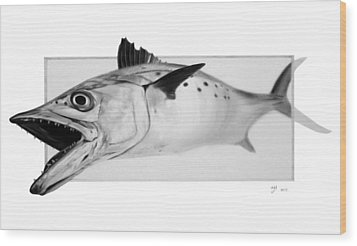 Spanish Mackerel - Pencil Wood Print