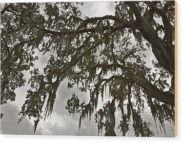 Wood Print featuring the photograph Spanish Moss by Alice Mainville