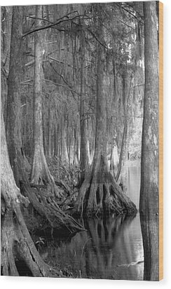 Spanish Moss And Pond Cypress. Shingle Creek. Wood Print