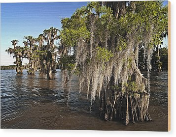 Wood Print featuring the photograph Spanish Moss by Andy Crawford