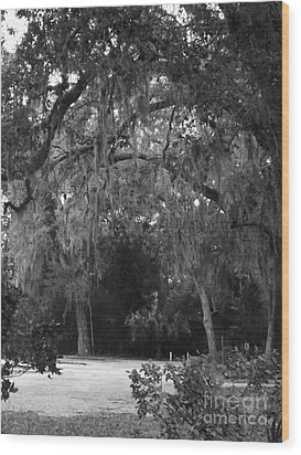 Wood Print featuring the photograph Spanish Moss Of St.augustine by Brigitte Emme