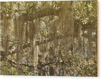 Spanish Moss On Live Oaks Wood Print by Christine Till