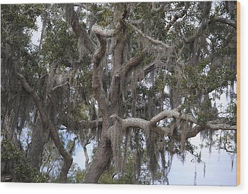 Spanish Moss On Live Oaks Wood Print by Michele Kaiser