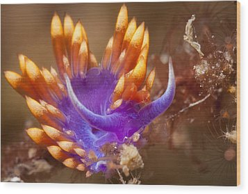 Spanish Shawl Nudibranch Wood Print