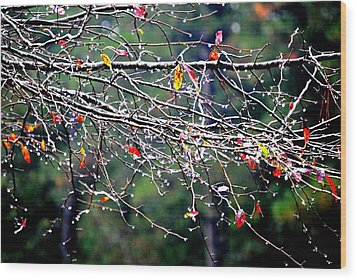 Sparkle Wood Print by Beverly Hammond