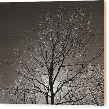 Sparkling Branches Wood Print by Kathi Mirto