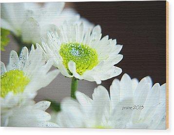 Sparkling Daisies Wood Print