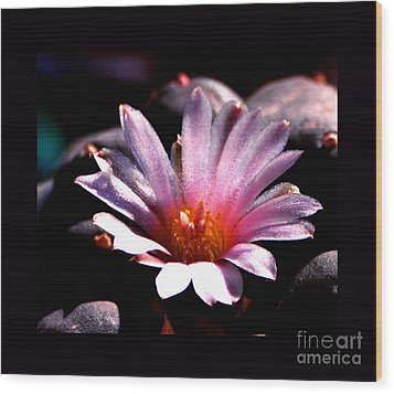 Sparkling Peyote Flower Wood Print by Susanne Still