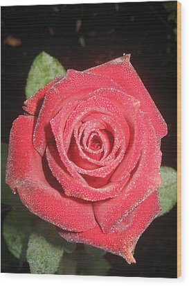 Sparkling Red Rose Wood Print by Celeste Tyree