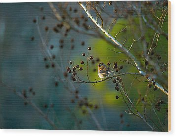 Sparrow In The Warm Light Wood Print by Shelby  Young