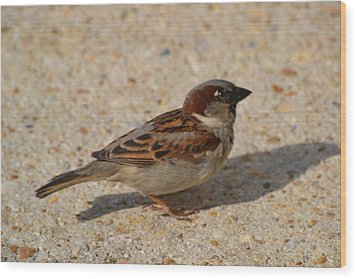 Wood Print featuring the photograph Sparrow by Mary Zeman