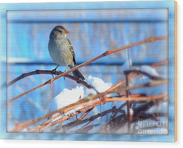 Wood Print featuring the photograph Sparrow On Grapevine by Heidi Manly