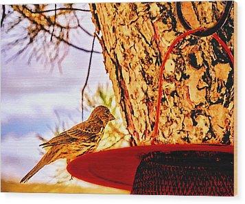 Sparrow Pine Tree Feeder Wood Print by Bob and Nadine Johnston