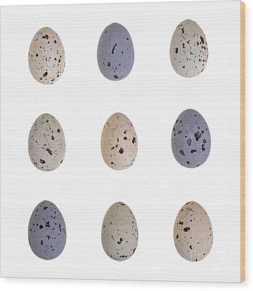 Speckled Egg Tic-tac-toe Wood Print by Jane Rix