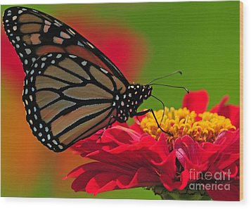 Wood Print featuring the photograph Speckled Monarch by Olivia Hardwicke