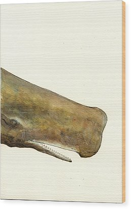 Sperm Whale First Part Wood Print by Juan  Bosco