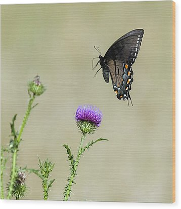 Spicebush Swallowtail 1 Wood Print by David Lester