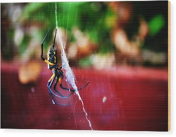 Spider And Web Wood Print by Adam LeCroy