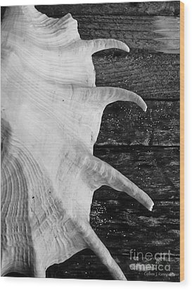 Spider Conch Shell Wood Print