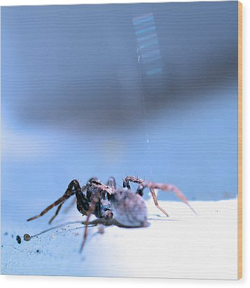 Spider In Blue Tone Wood Print by Tommytechno Sweden