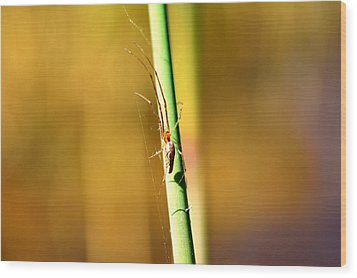 Spider In The Reeds  Wood Print by Tommytechno Sweden