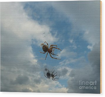 Wood Print featuring the photograph Spider by Jane Ford
