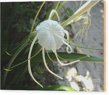 Wood Print featuring the photograph Spider Lily1 by Megan Dirsa-DuBois